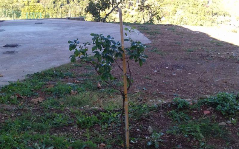la nostra pianta di corbezzolo posta in terra al termine degli Esercizi Spirituali